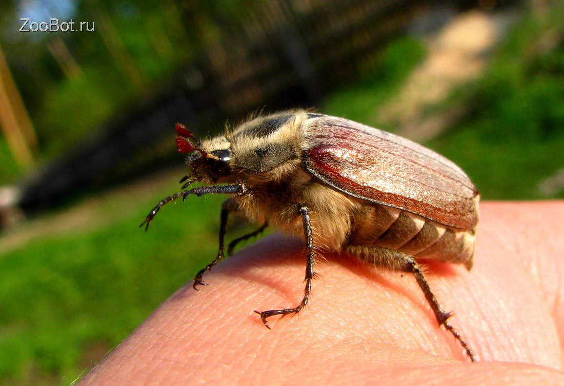 Что могут делать жуки и какие они